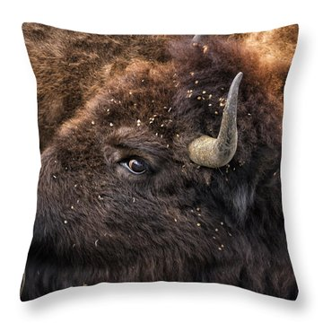 Throw Pillow featuring the photograph Wild Eye - Bison - Yellowstone by Belinda Greb