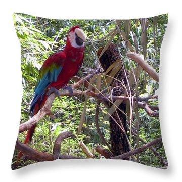 Throw Pillow featuring the photograph Wild Hawaiian Parrot  by Joseph Baril