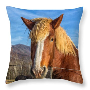 Wild Horse At Cades Cove In The Great Smoky Mountains National Park Throw Pillow