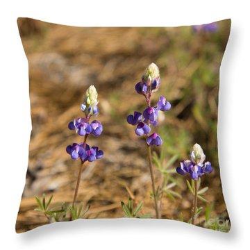 Wild Lupins Throw Pillow by Jane Rix
