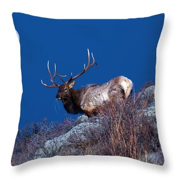 Wild Moon Throw Pillow