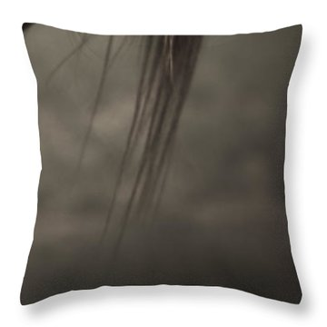 Wild Mustangs Of New Mexico 11 Throw Pillow