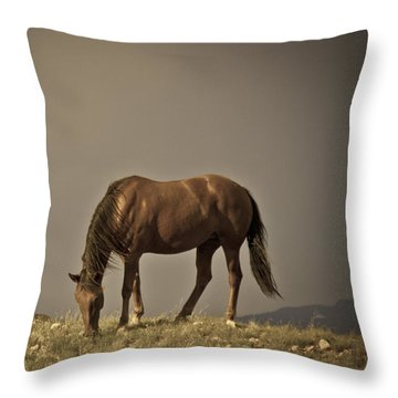 Wild Mustangs Of New Mexico 20 Throw Pillow