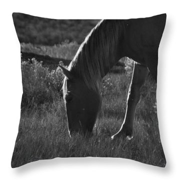 Wild Mustangs Of New Mexico 7 Throw Pillow