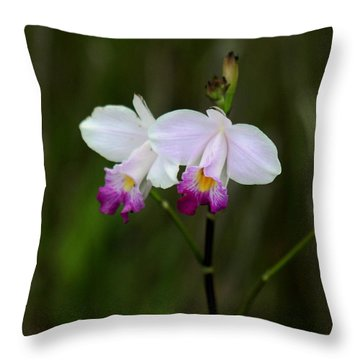 Wild Orchid Throw Pillow by Pamela Walton