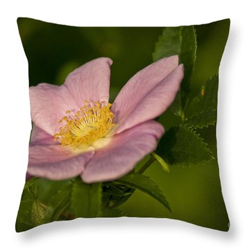 Wild Rose Throw Pillow by Alana Ranney
