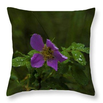 Wild Rose In Rain Throw Pillow