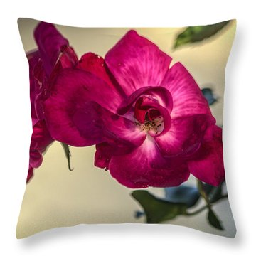 Wild Rose Throw Pillow by Jane Luxton