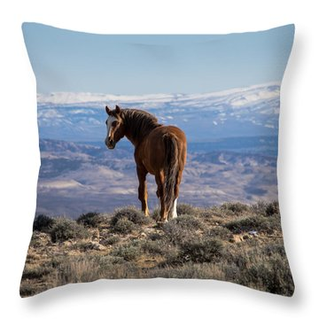 Wild Stallion Of Sand Wash Basin Throw Pillow