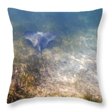 Throw Pillow featuring the photograph Wild Sting Ray by Eti Reid