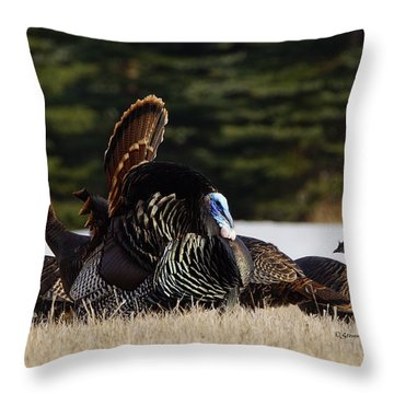 Wild Turkeys Throw Pillow by Steven Clipperton