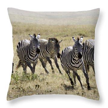 Wild Zebras Running  Throw Pillow