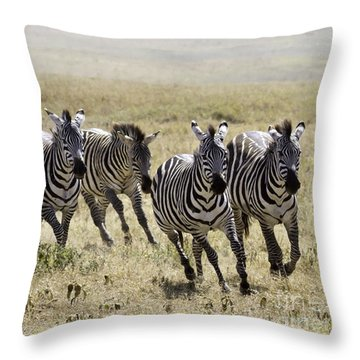 Throw Pillow featuring the photograph Wild Zebras Running  by Chris Scroggins