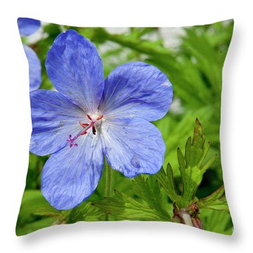 Throw Pillow featuring the photograph Wildflower by Rod Wiens