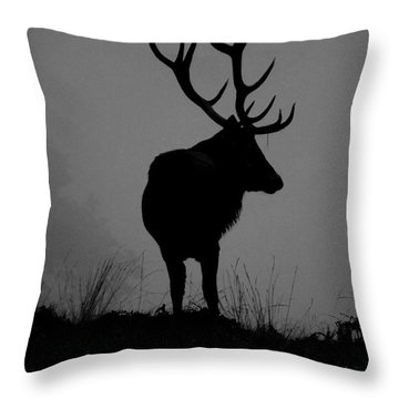 Wildlife Monarch Of The Park Throw Pillow