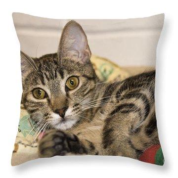 Wilkie Throw Pillow