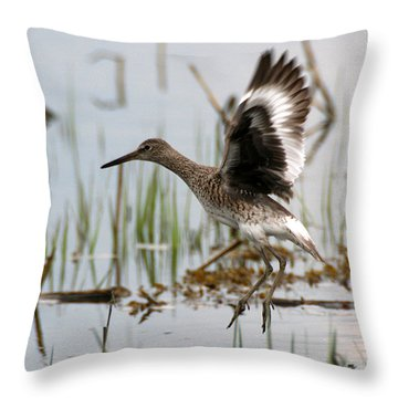 Willet Taking Flight Throw Pillow
