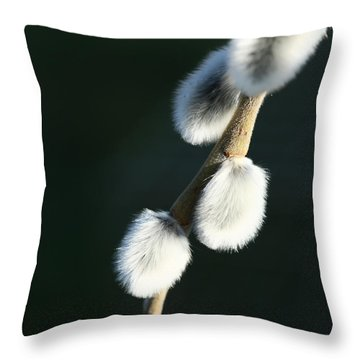 Throw Pillow featuring the photograph Willow On Black by Liz  Alderdice