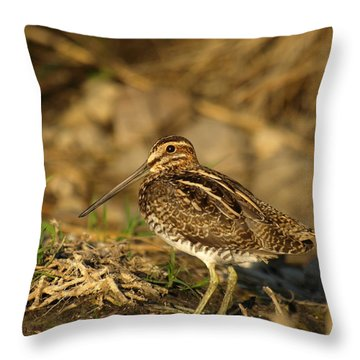 Wilson's Snipe Throw Pillow by James Peterson
