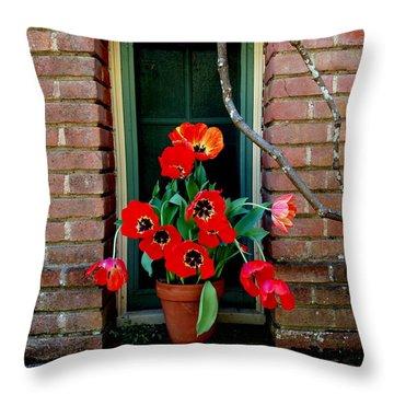 Windows Series - 4 Throw Pillow by Haleh Mahbod