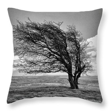 Windswept Tree On Knapp Hill Throw Pillow