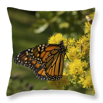 Wings - Monarch On Goldenrod Throw Pillow by Jane Eleanor Nicholas