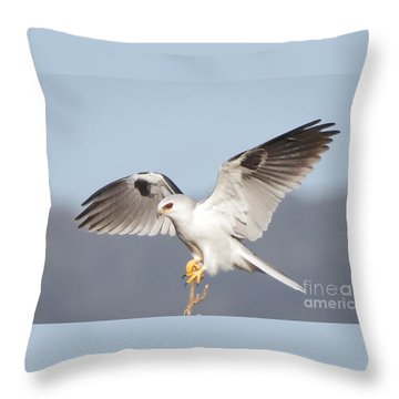 Wingspan Throw Pillow by Alice Cahill