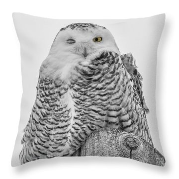 Winking Snowy Owl Black And White Throw Pillow