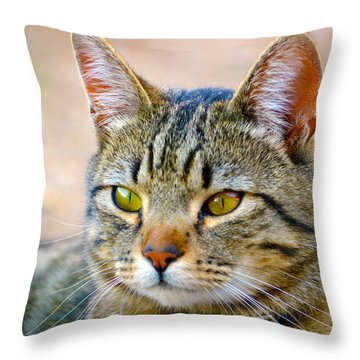 Winston 8 Throw Pillow