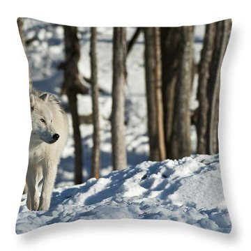 Throw Pillow featuring the photograph Winter Arctic Wolf by Wolves Only
