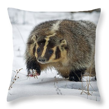 Throw Pillow featuring the photograph Winter Badger by Jack Bell