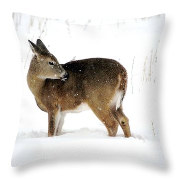 Throw Pillow featuring the photograph Winter Bath Time by Dacia Doroff