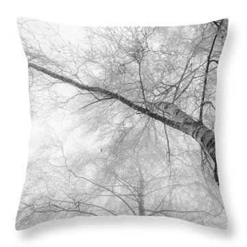 Winter Birch - Bw Throw Pillow by Hannes Cmarits