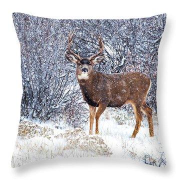 Winter Buck Throw Pillow