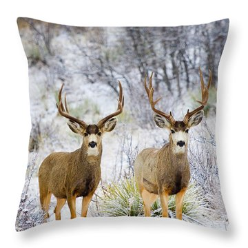 Winter Bucks Throw Pillow