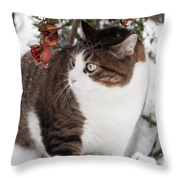 Throw Pillow featuring the photograph Winter Cat by Laura Melis