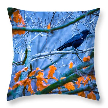 Throw Pillow featuring the photograph Winter Chill by Brian Stevens