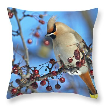 Winter Colors.. Throw Pillow