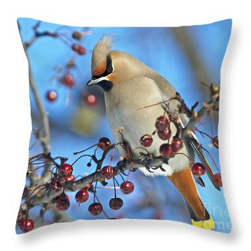 Winter Colors.. Throw Pillow by Nina Stavlund