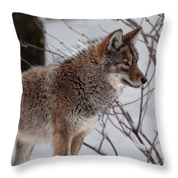 Winter Coyote Throw Pillow