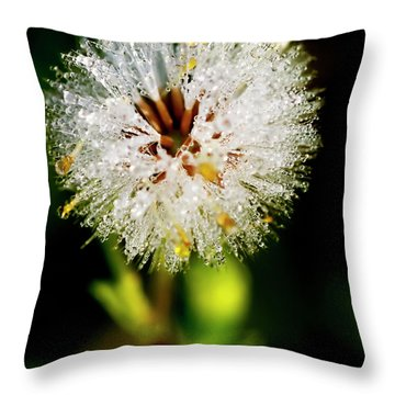 Throw Pillow featuring the photograph Winter Dandelion by Pedro Cardona