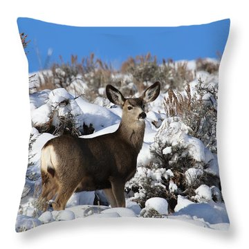 Winter Doe Throw Pillow by Marty Fancy