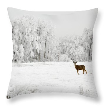 Winter Doe Throw Pillow