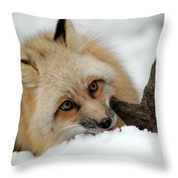 Winter Fox 2 Throw Pillow