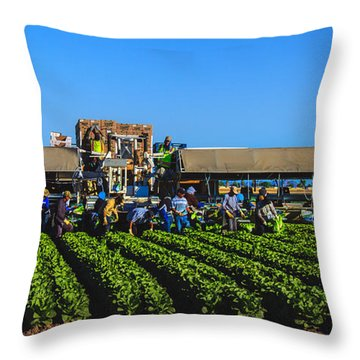 Winter Lettuce Harvest Throw Pillow by Robert Bales