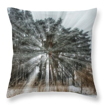 Winter Light In A Forest Throw Pillow