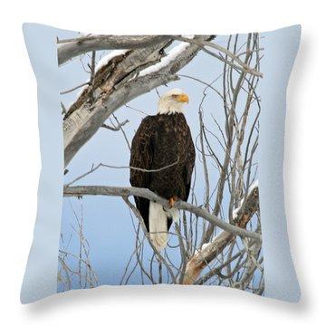 Winter Perch Throw Pillow
