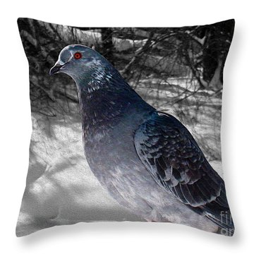 Throw Pillow featuring the photograph Winter Pigeon by Nina Silver