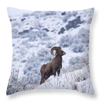 Winter Ram Throw Pillow by Mike  Dawson
