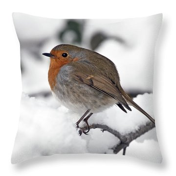 Throw Pillow featuring the photograph Winter Robin by Ross G Strachan